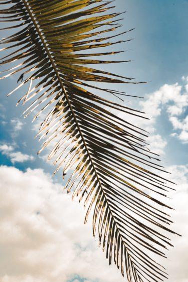飲む日焼け止めの効果を検証 in Hawaii
